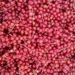 Brambletye: Red currants
