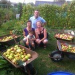 Picking apples at Spa Hill Allotments