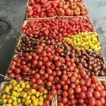 Wild Country Organics: How's about those tomatoes?