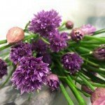 Wild Country: Chives