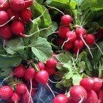 Brockmans: ravishing radishes
