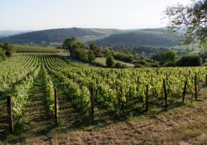 Wine Scouts Loire Valley